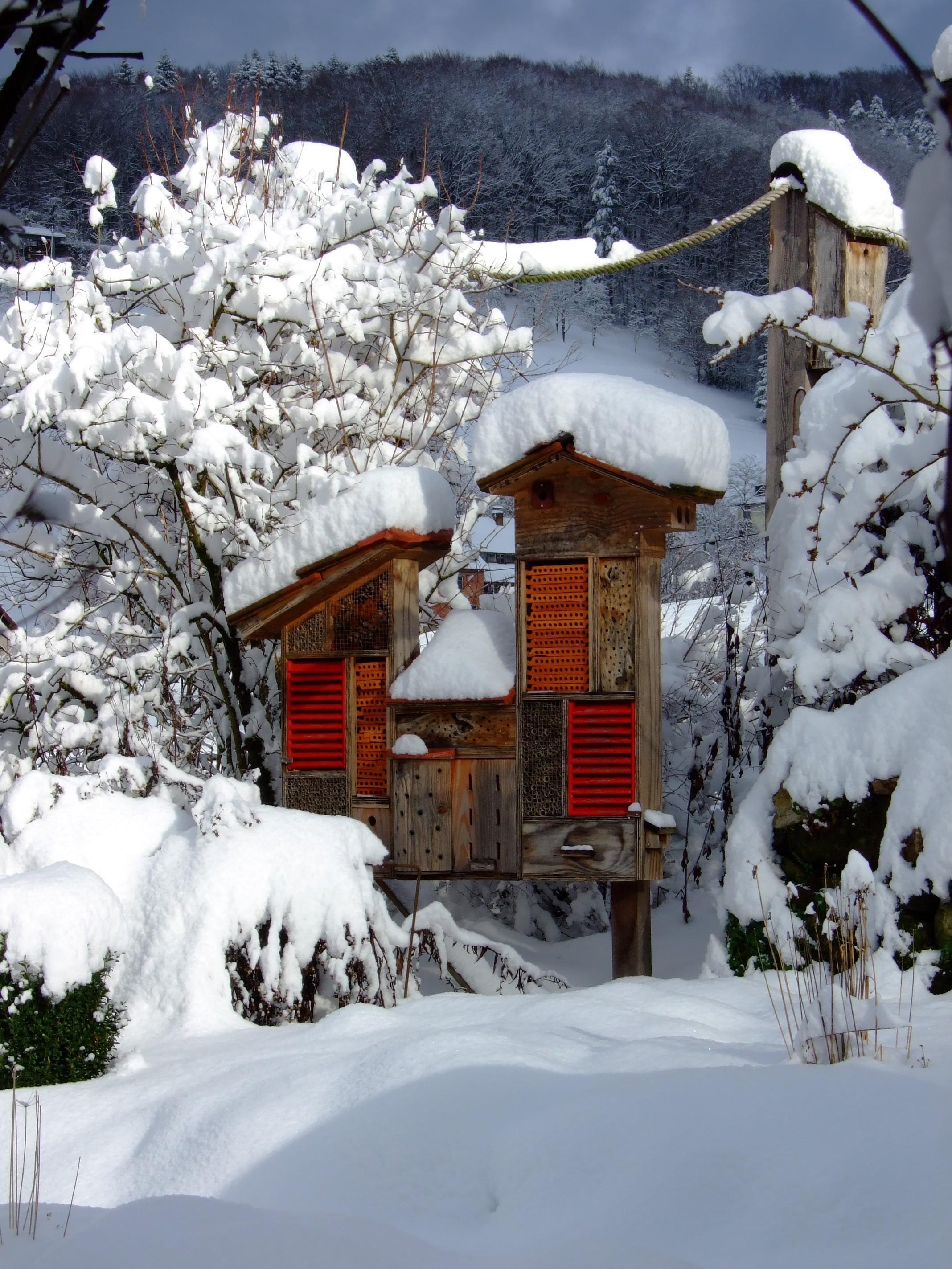 Winter (8)